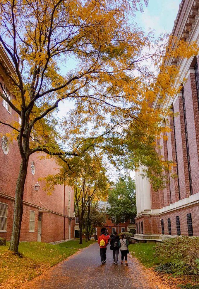 It's fall. Harvard Yard, October 2018